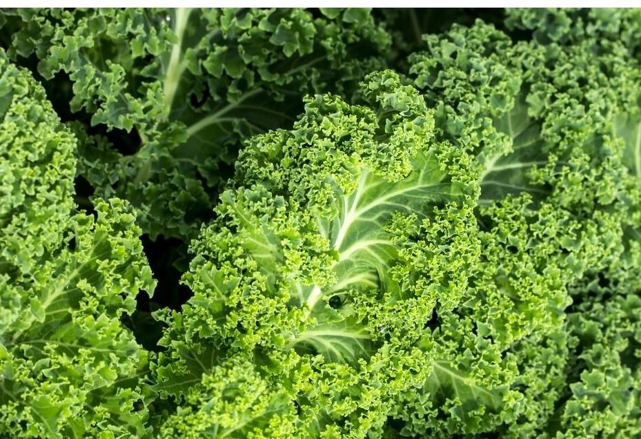 Vegetarischer Grünkohleintopf